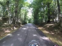 Foreste Umbra