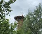 Storch in Pinggau