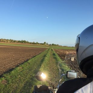 Feldweg mit Hase