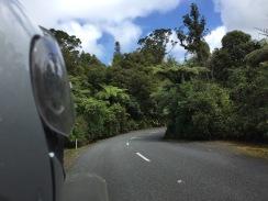 Fahrt durch den Waipoua Forest
